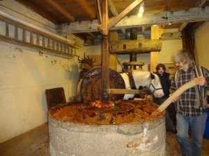 Fergus harnessed and pulling a mill stone which ran over apples crushing them into liquid. Gloucestershire used to be known for its orchards and cider making.