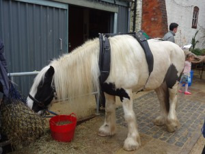 Fergus the horse having a feed after working