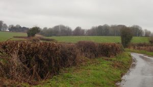Hedgerow. all looked to have been cut recently.